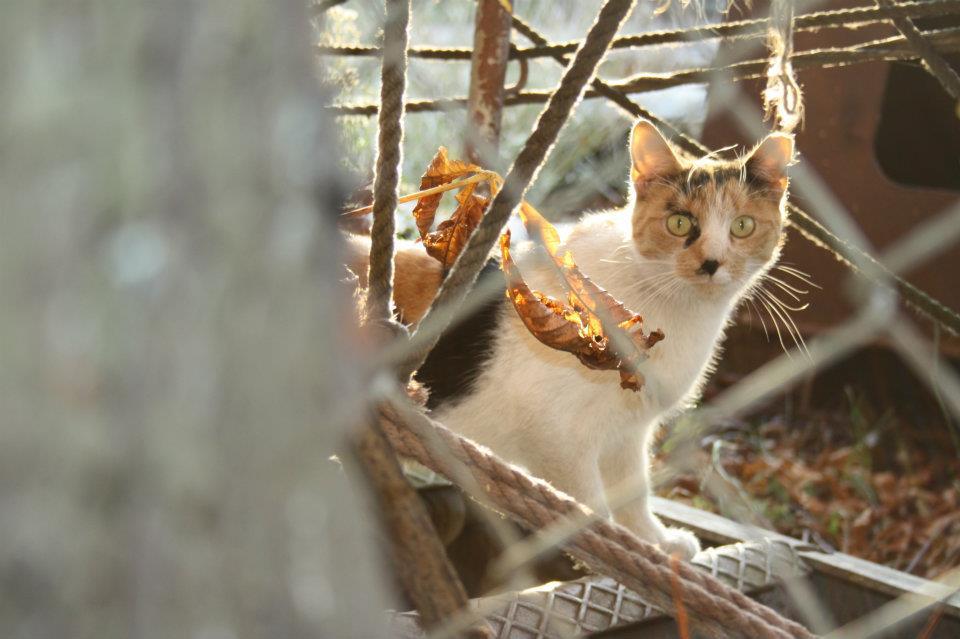 Koty Stocznia Nauta zdjęcie nr 7