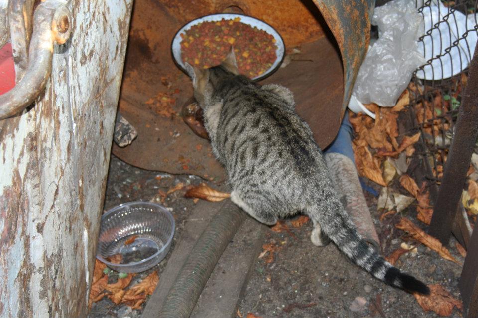 Koty Stocznia Nauta zdjęcie nr 11