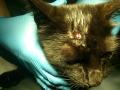 Koty Stocznia Nauta zdjęcie nr 16