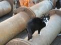 Koty Stocznia Nauta zdjęcie nr 5