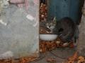 Koty Stocznia Nauta zdjęcie nr 9
