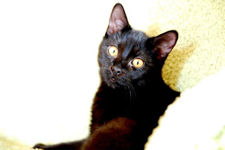 Zabrane koty ze Stoczni Nauta zdjęcie nr 6