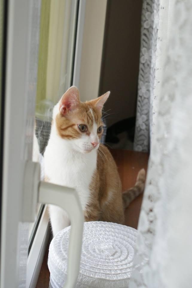 Zabrane koty ze Stoczni Nauta zdjęcie nr 5