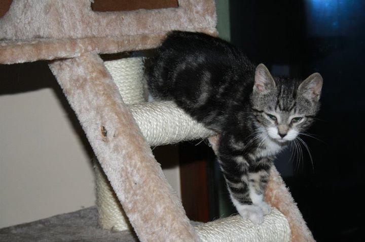Zabrane koty ze Stoczni Nauta zdjęcie nr 9