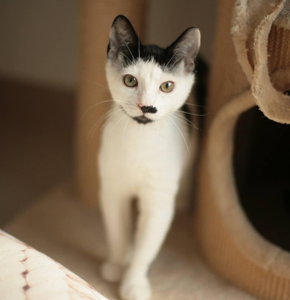 Zabrane koty ze Stoczni Nauta zdjęcie nr 2