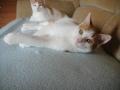 Zabrane koty ze Stoczni Nauta zdjęcie nr 12