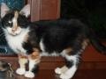 Zabrane koty ze Stoczni Nauta zdjęcie nr 8
