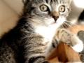 Zabrane koty ze Stoczni Nauta zdjęcie nr 10