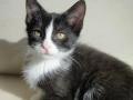 Zabrane koty ze Stoczni Nauta zdjęcie nr 11