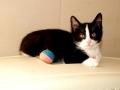 Zabrane koty ze Stoczni Nauta zdjęcie nr 13
