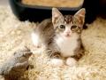 Zabrane koty ze Stoczni Nauta zdjęcie nr 14