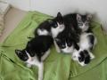Zabrane koty ze Stoczni Nauta zdjęcie nr 15