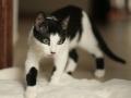 Zabrane koty ze Stoczni Nauta zdjęcie nr 1