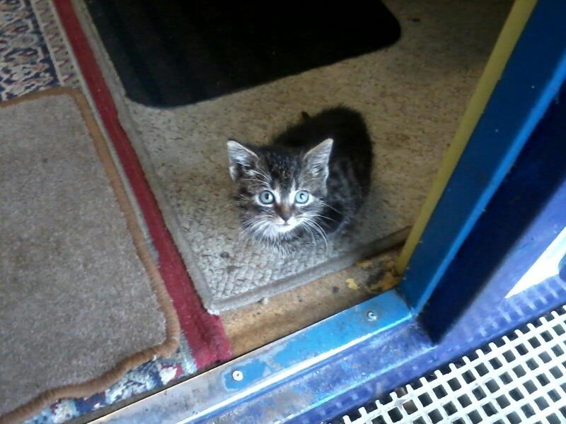 Kociak ze stoczni