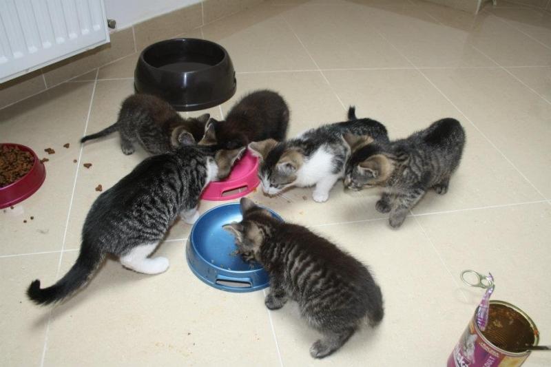 Kocie dzieciaki