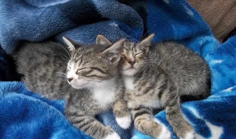 Kociaki z Toruńskiej