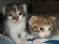 Dzieciaki kociaki