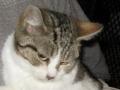 Kociak z budki