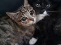Kociaki z torowiska