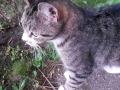 kotka z Makuszyńskiego