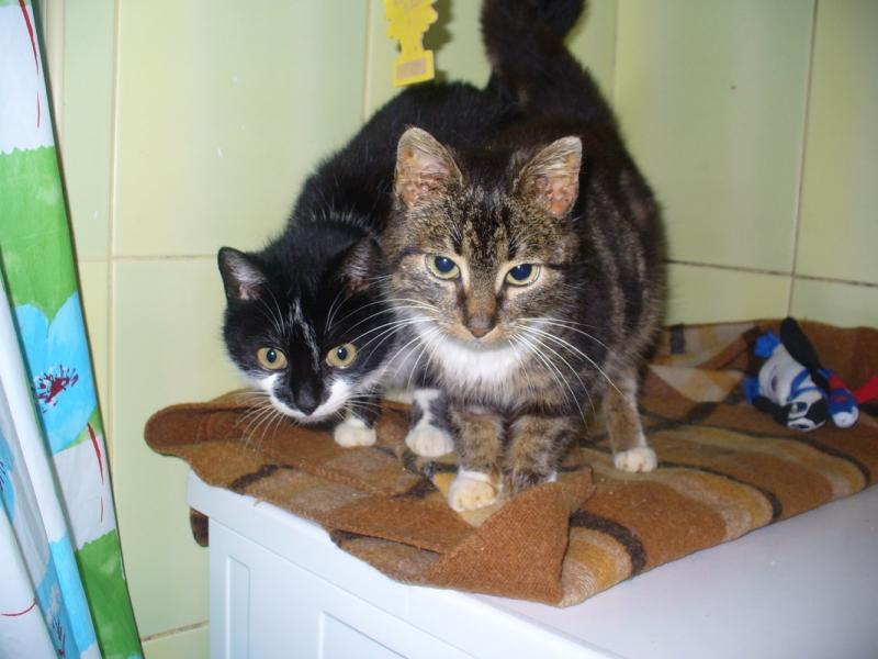 Szymcia i Agnes