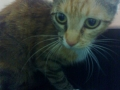 Portowa kotka