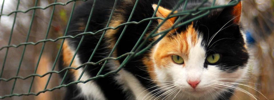 Pomorski Koci Dom Tymczasowy