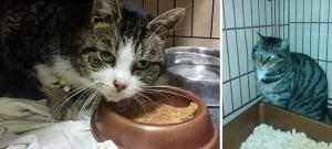 Bąbel i Chila - koty z PKDT szukają domu