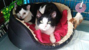 Koty Bułeczka i Rogalik