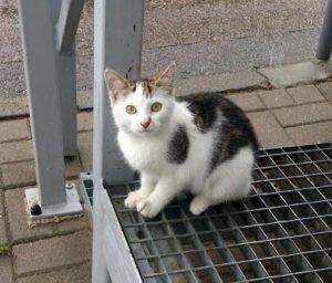 Kotek Migdałek