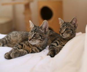 Koty Milik i Krycha