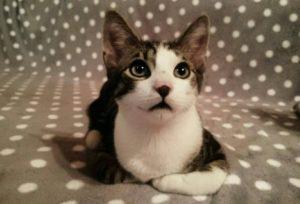 Kot Staś