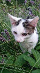 Kot Henryk