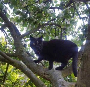 Kotka Marysia na drzewie