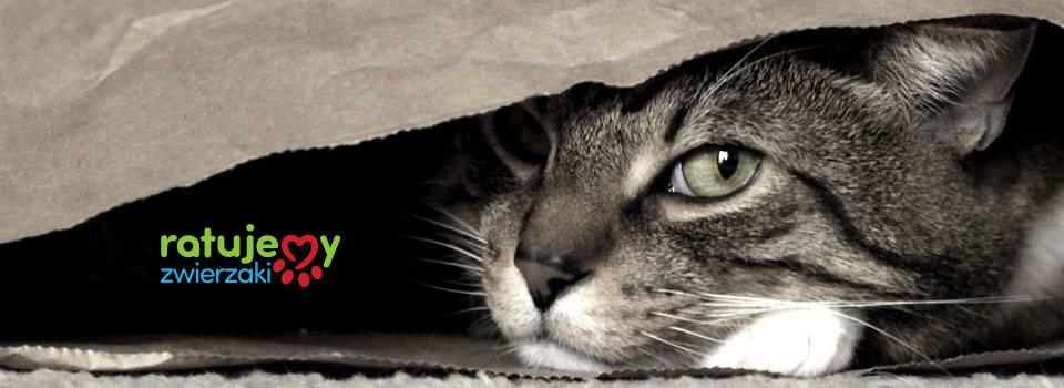 Pomóż kotom z Trójmiasta i okolic